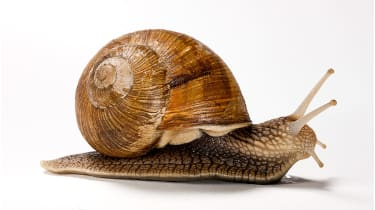 A snail © Getty Images