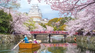 Himeji Castle and cherry blossom