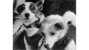 Belka and Strelka © Bettmann Archive/Getty Images