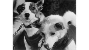 Belka and Strelka ©Bettmann Archive/Getty Images