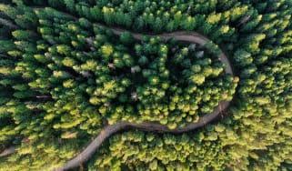 Woods and road seen from above
