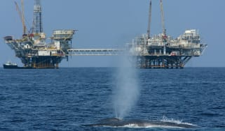Whale swimming past oil rigs