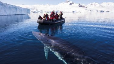People in a dinghy watching a whale surface