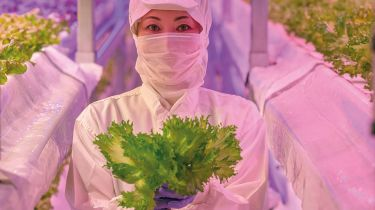 Hydroponics worker with lettuce plants